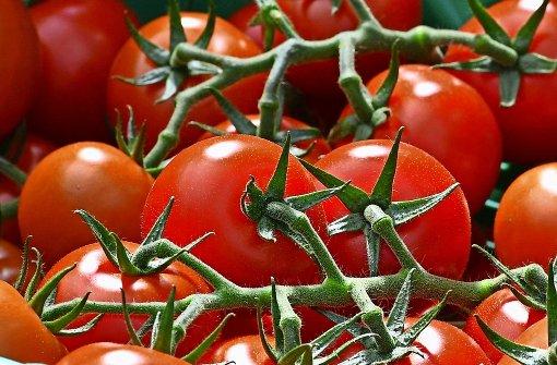 wie pflanzen sch dlinge abwehren tomate gegen teufelszwirn wissen stuttgarter zeitung. Black Bedroom Furniture Sets. Home Design Ideas