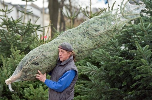 Weihnachtsbaumverkauf startet: Nordmanntanne bleibt der Klassiker - Stuttgarter Zeitung