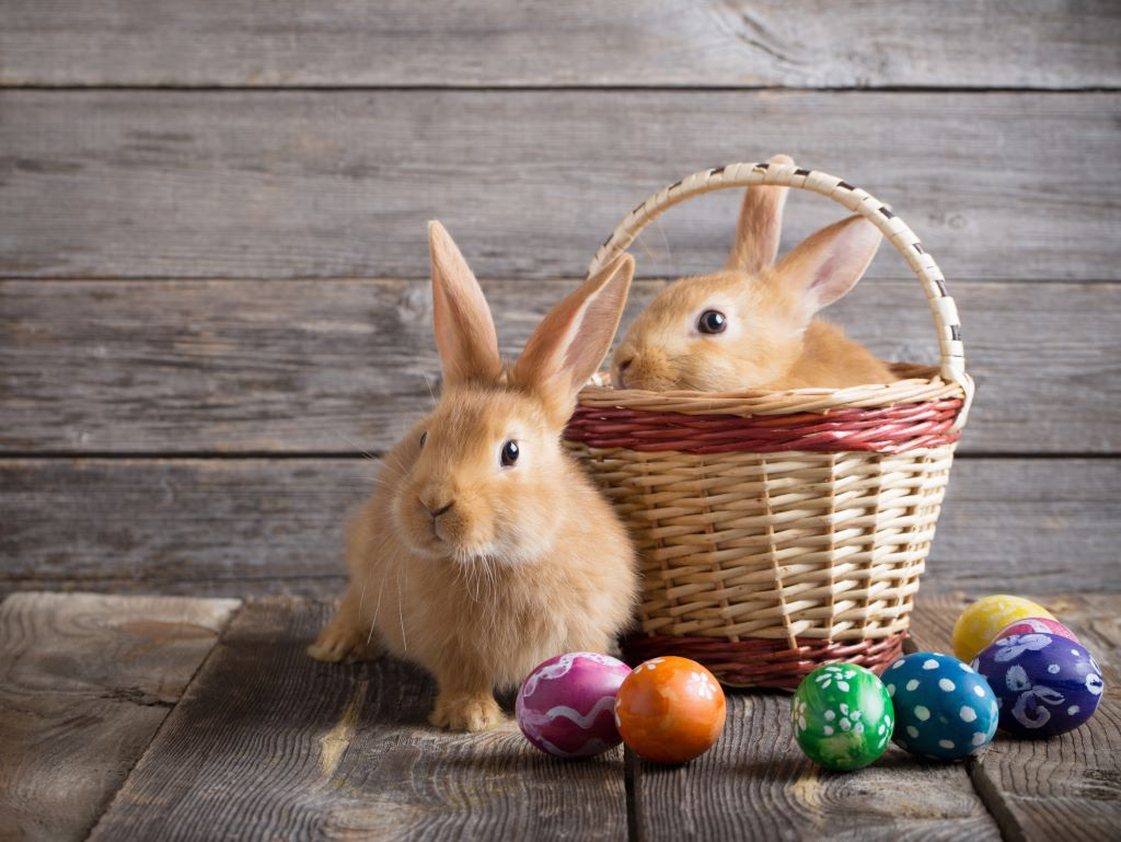 warum bringt der osterhase eier