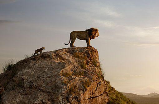 Animation: König der Löwen 3D