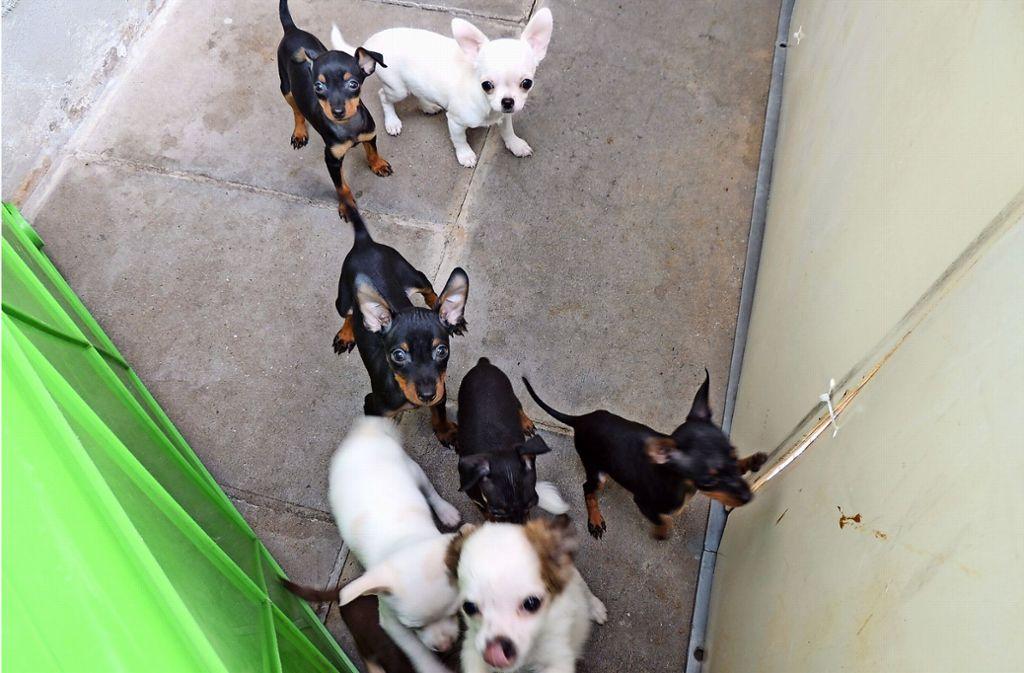 Tierheim In Stuttgart Botnang Hundewelpen Konnen Auf Eine Gluckliche Zukunft Hoffen Botnang Stuttgarter Zeitung