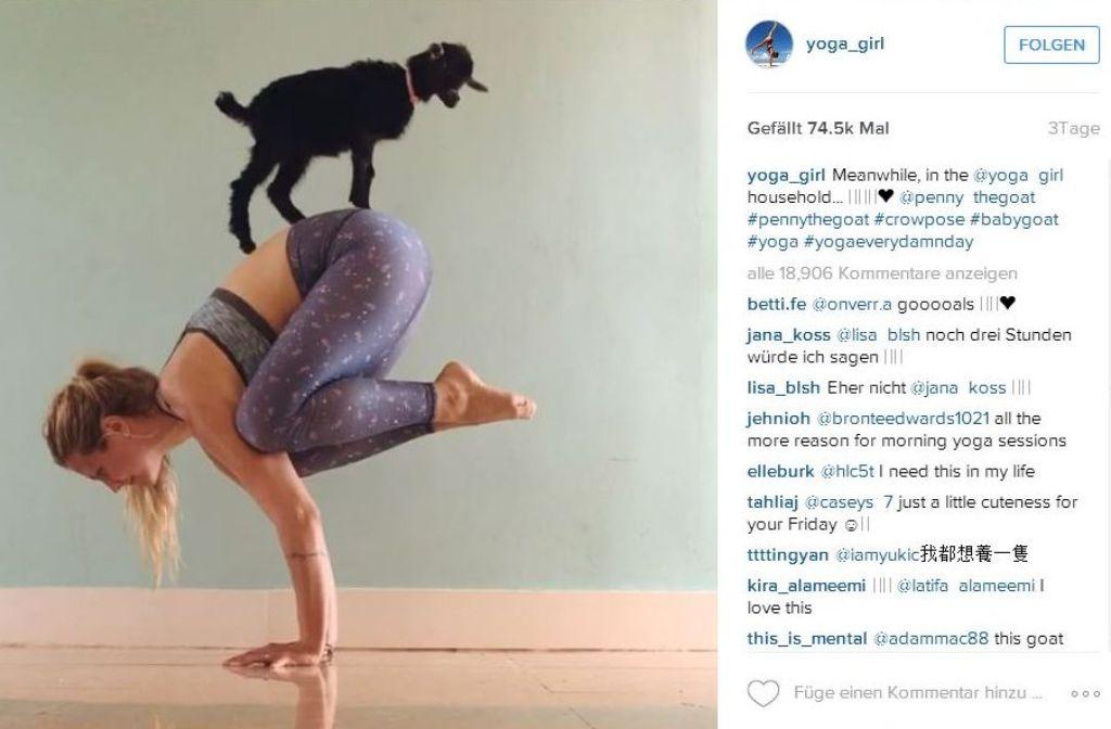 yoga girl rachel brathen handstand mit ziege petcontent stuttgarter zeitung. Black Bedroom Furniture Sets. Home Design Ideas