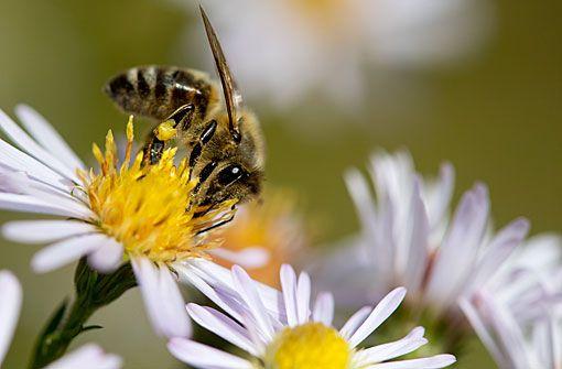 Staatliches Museum für Naturkunde: Sterben die Insekten?