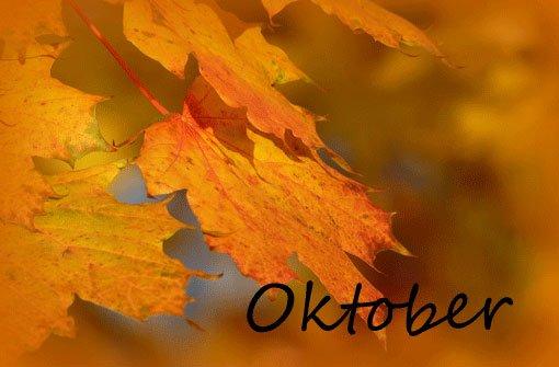 Auch Oktober, November und Dezember des Jahres 2012 sind gespickt mit Geschichten: Labbadia rastet aus, Kuhn triumphiert und Güterwaggons machen sich selbständig. Hier die wichtigsten Ereignisse: Foto: Leserfotograf rika