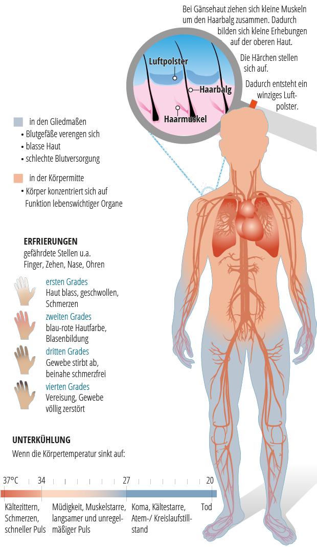 Großzügig Gekennzeichnet Diagramm Muskeln Im Körper Zeitgenössisch ...
