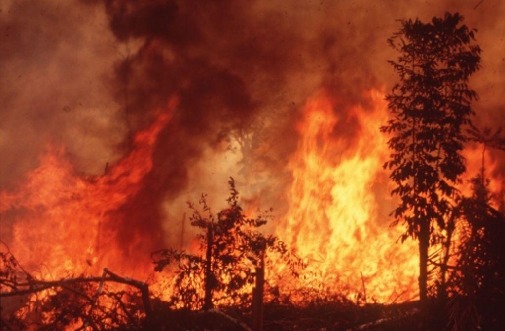 amazonas brennt immer noch