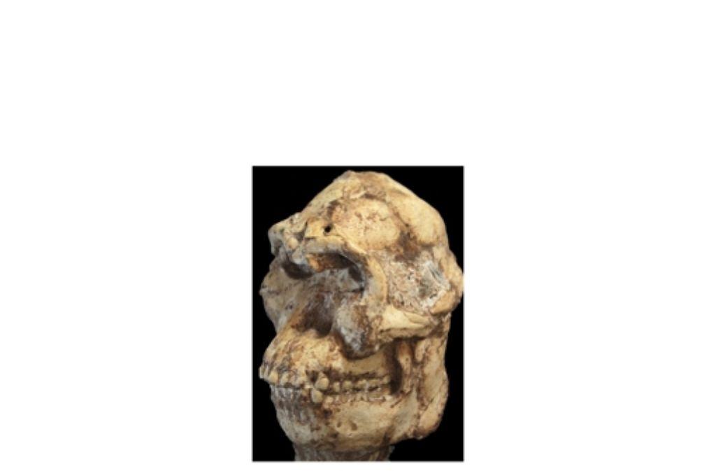 Wie wird radioaktive Datierung verwendet, um das Alter eines Fossils zu bestimmen