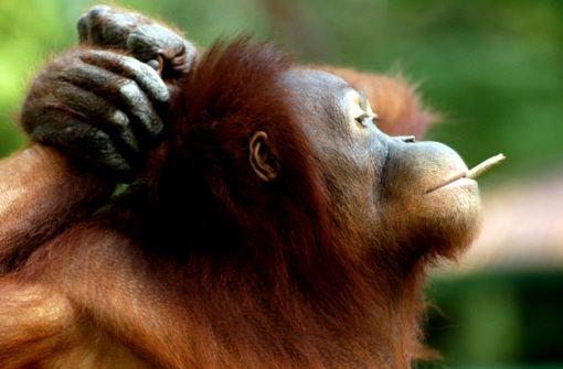 Die schrägsten Tiere 2012