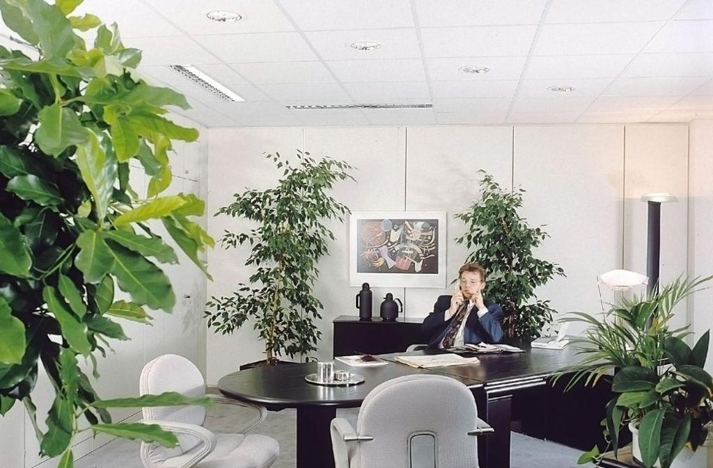 Grun Am Arbeitsplatz Unkaputtbare Buropflanzen Wissen