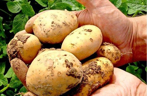 Neue Genkartoffel in den USA