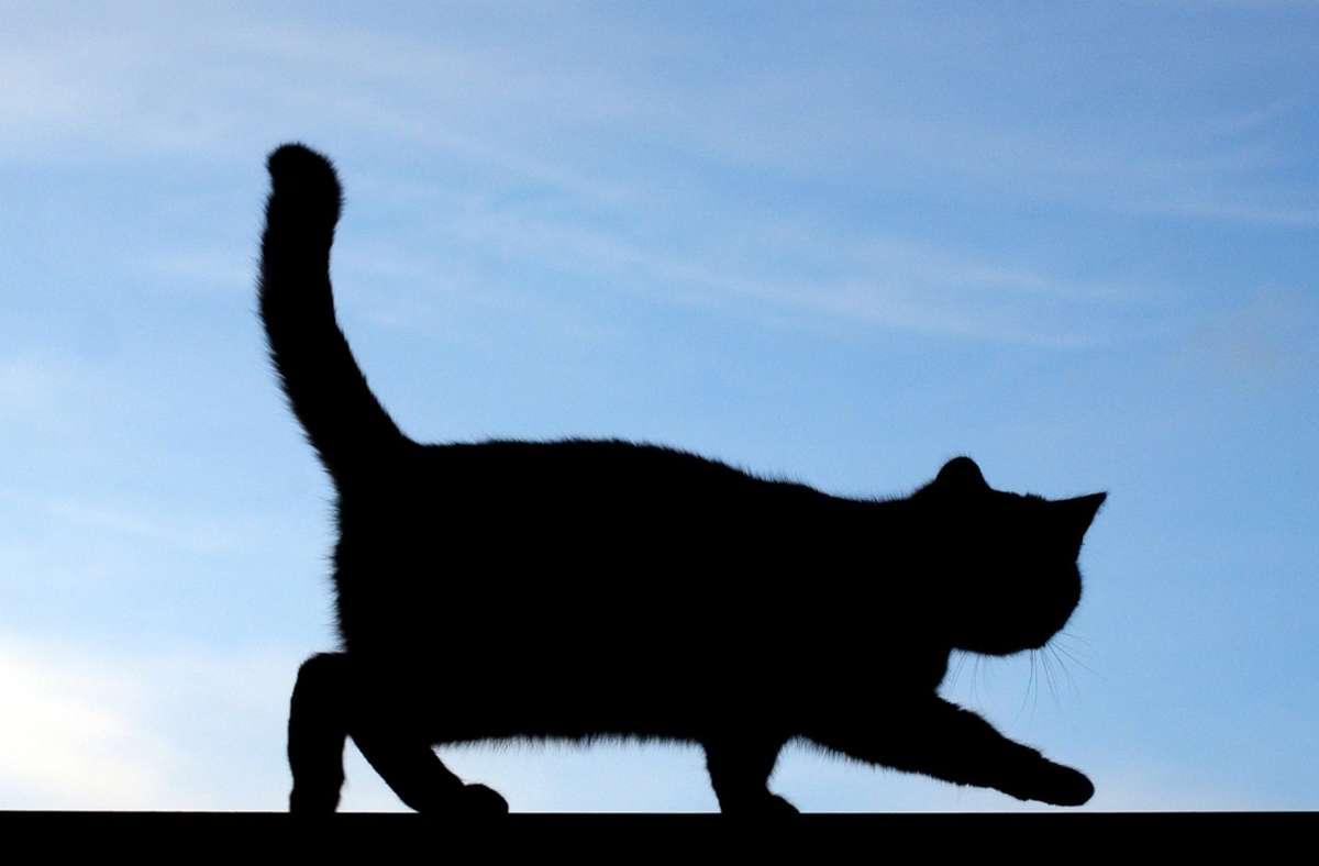 Waiblingen: Radler weicht Katze aus und wird schwer verletzt