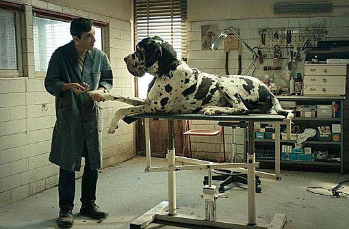 Drama: Dogman