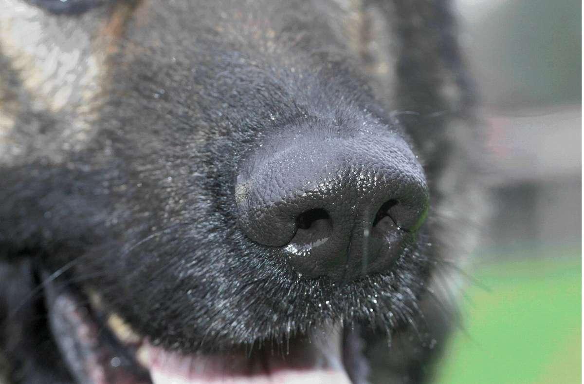 Happy End in Wales: Polizeihund wird bei erstem Einsatz zum Lebensretter für Frau und Baby
