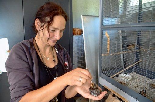 Karolin Müller reicht  den jungen Nesthäkchen ein spezielles Futter. Foto: Jens Noll