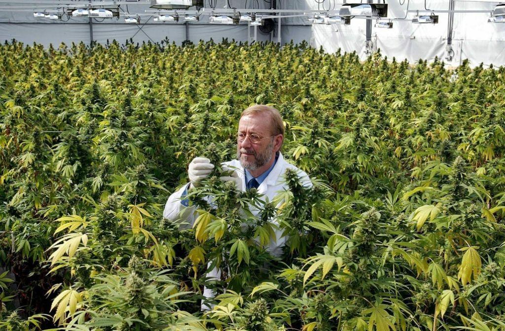 Гайд по выращиванию марихуаны фон с коноплей