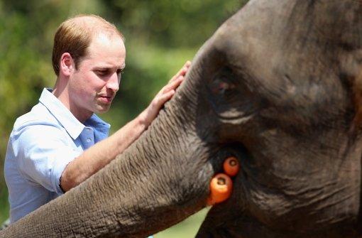 Karotten für die Elefanten