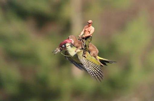 Wenn Putin den Pecker reitet