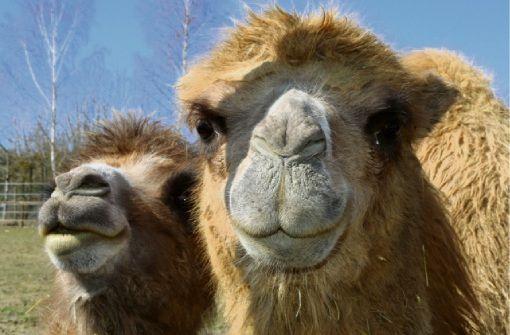 Fußballgolf, eine Spielscheune und Kamele zum Anfassen gibt es im Freizeitpark Rotfelden