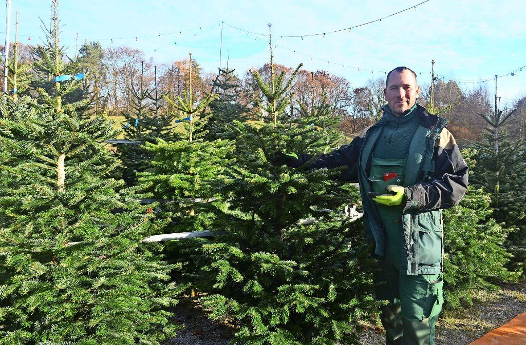 Weihnachtsbaum der nach zitrone riecht