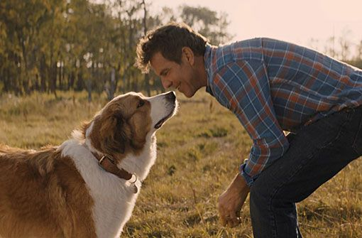 Abenteuer : Bailey - Ein Hund kehrt zurück