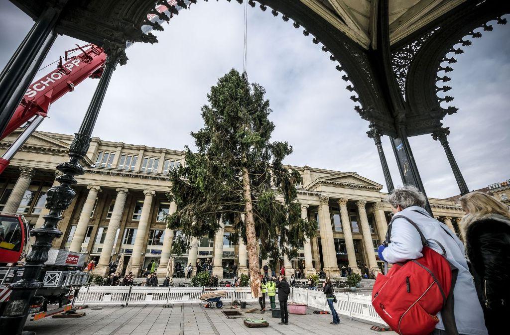 stuttgart weihnachtsbaum auf dem schlossplatz aufgestellt. Black Bedroom Furniture Sets. Home Design Ideas