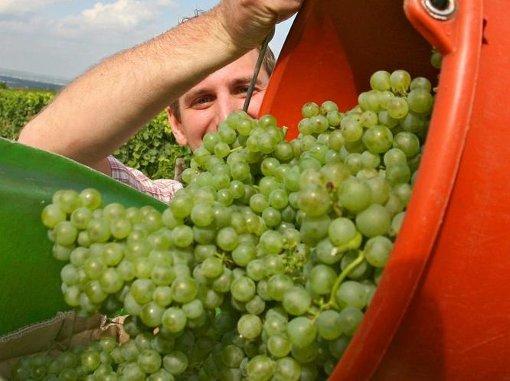 Neben Weinsäure enthält Wein auch einige weitere, natürliche Säuren. Foto: dpa