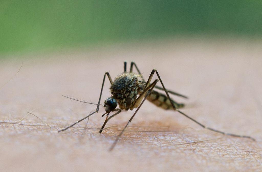Insekten Im Sommer Beißer Blutsauger Und Stecher Panorama