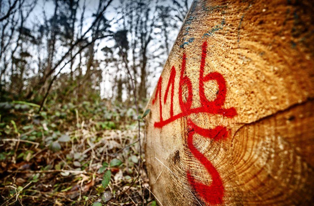 Waiblinger Stadtwald Erlöse Aus Holzverkauf Sind Gesunken Rems