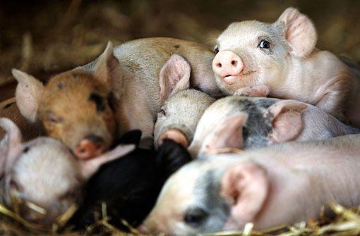 Dokumentation: Unsere große kleine Farm