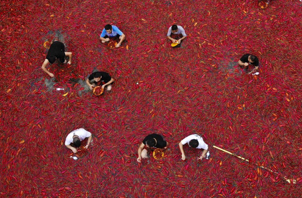 【辛��】中国で唐辛子の大食い選手権 1分で50個の猛者も ->画像>6枚