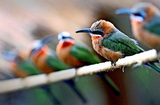 Der Stammbaum der Vögel – neu bestimmt