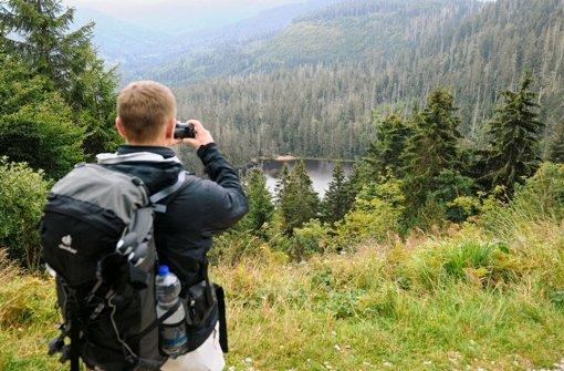 Die CDU äußert sich zum Nationalpark Nordschwarzwald. Foto: dpa