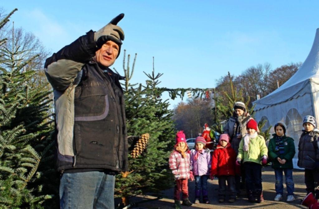 Weihnachtsbaum Samen.Weihnachtsbäume In Degerloch Der Weihnachtsbaum Zum Weiterwachsen