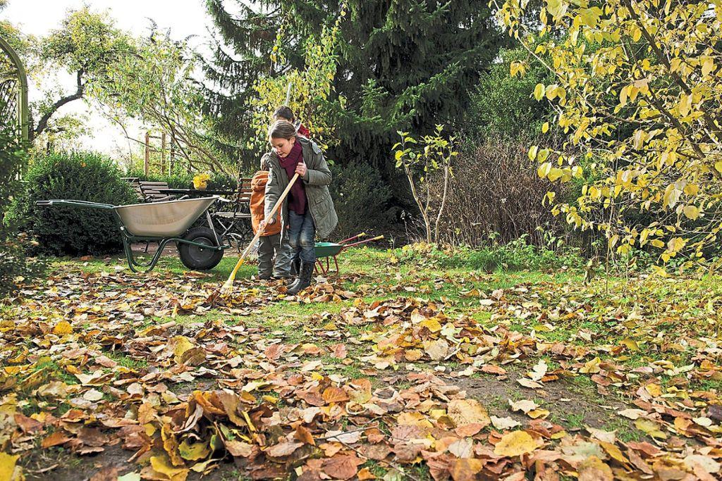 Rasen Düngen Herbst : rasen d ngen im herbst das gilt es bei der rasenpflege zu ~ Watch28wear.com Haus und Dekorationen