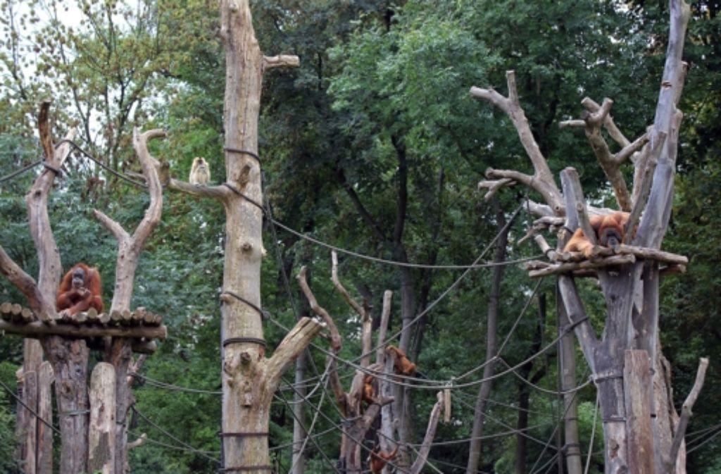 ein besuch im leipziger zoo sch ner wohnen f r primaten. Black Bedroom Furniture Sets. Home Design Ideas