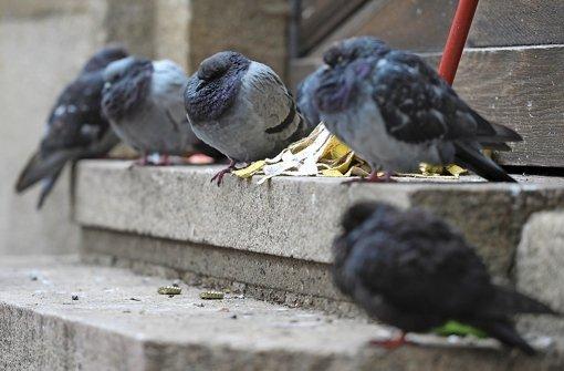 Füttern von Tauben bleibt verboten