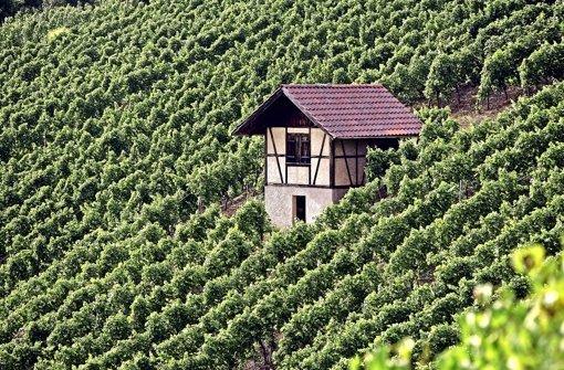 Rettung für die Weinbaulandschaft