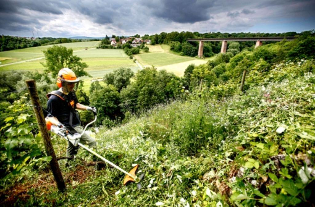 Waiblingen: Profis helfen beim Kampf gegen das Gestrüpp - Rems-Murr ...