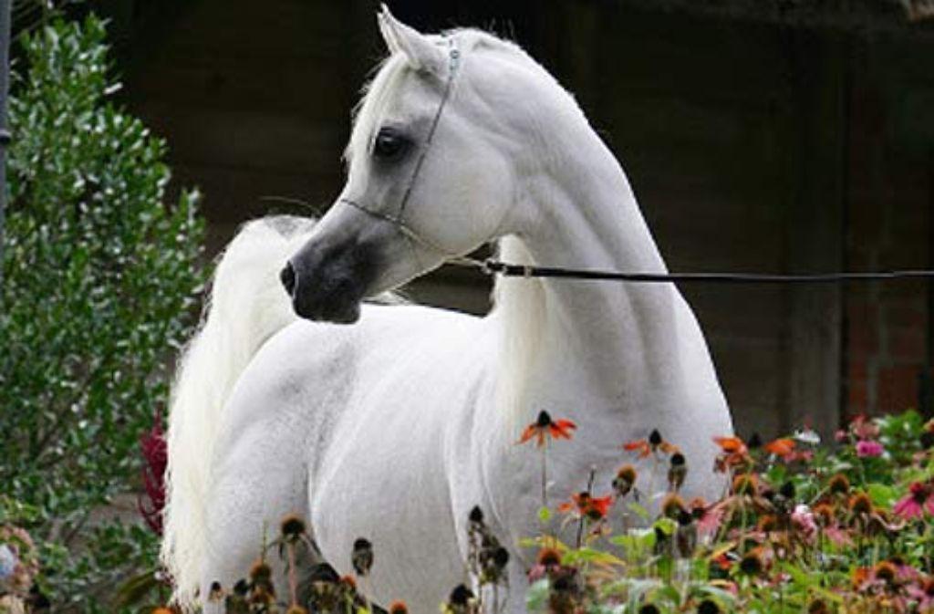 Bekanntschaften pferde