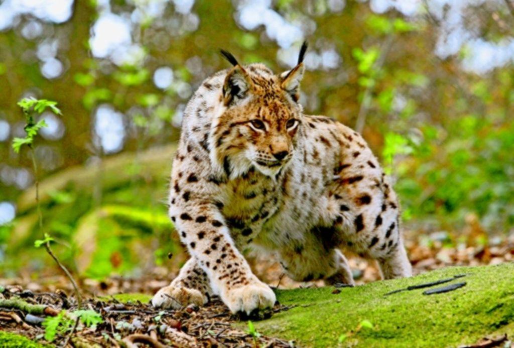 Tierwelt bekanntschaften