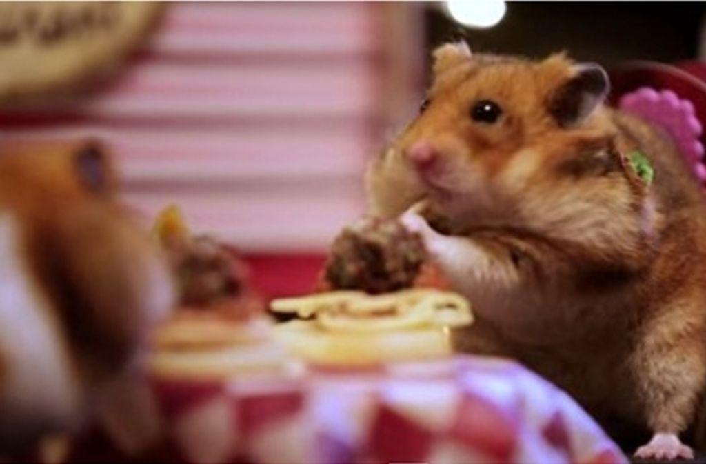 Keine Hamster datiert Beste kostenlose Dating-Seiten ireland