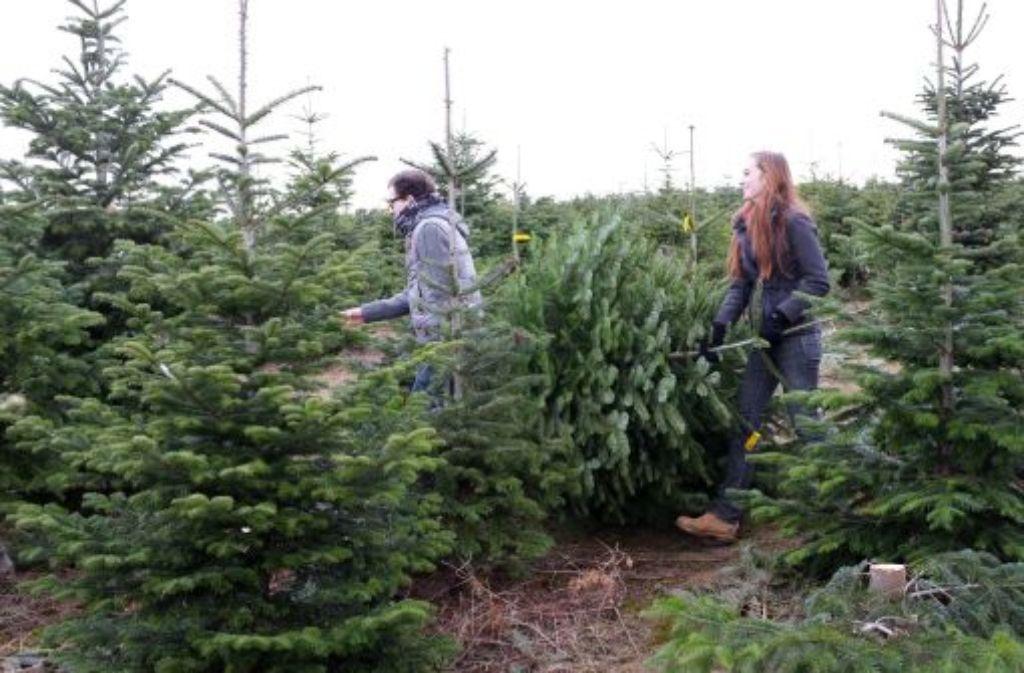 Weihnachten: Das Geschäft mit Christbäumen läuft prima - Baden ...