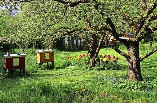 Ohne Bienen exisitert kein Leben