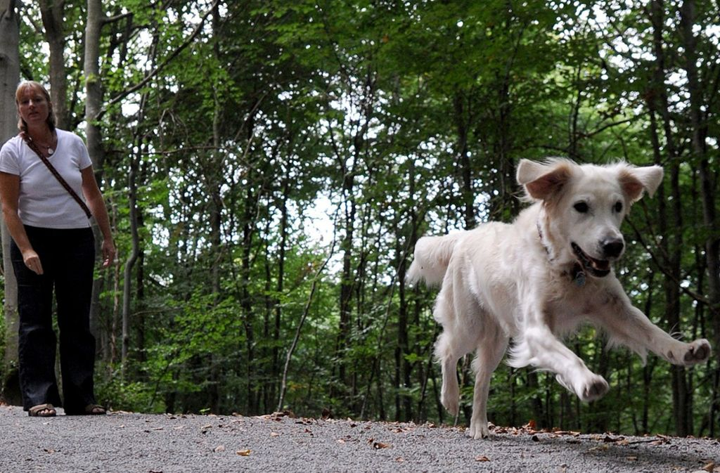 Stuttgart Immer Mehr Zwischenfälle Mit Hunden über 1000 Anzeigen