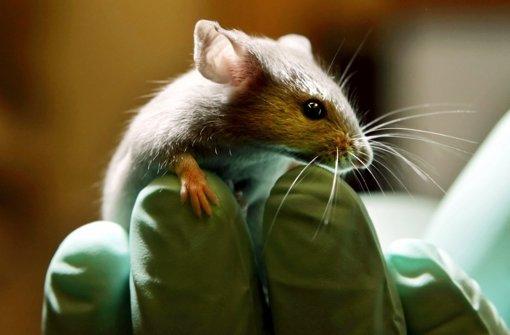 Da beißt die Maus keinen Faden ab