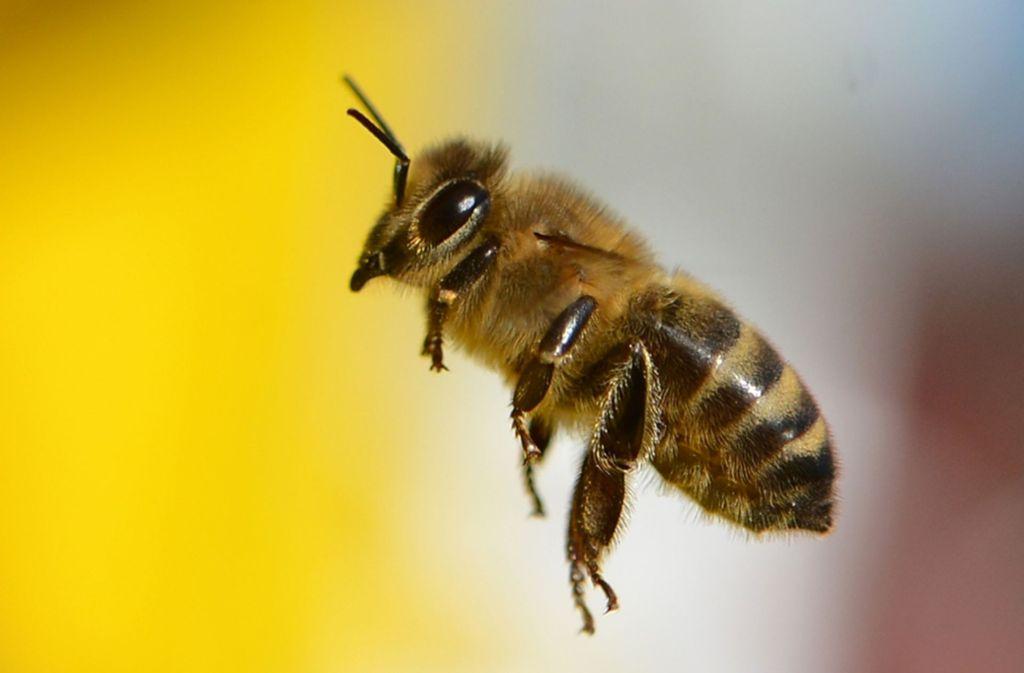 imker auf den fildern was ist dran am krieg der bienen plieningen stuttgarter zeitung