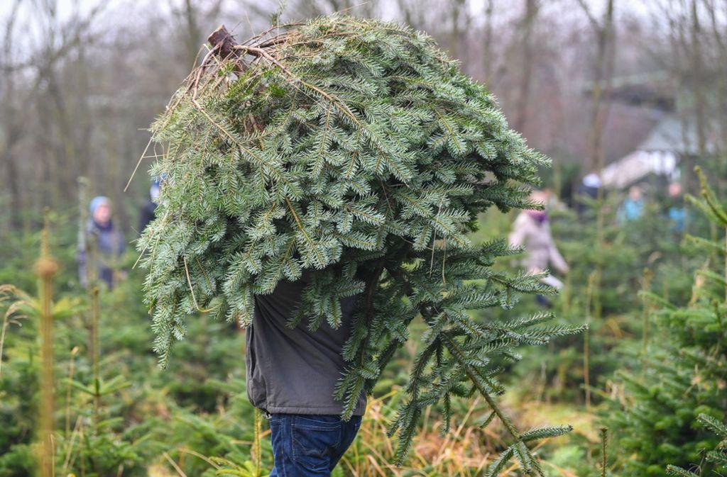 Weihnachtsbaum abholung stuttgart 2018