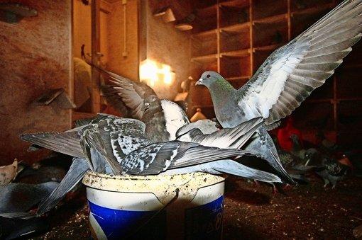 Ungeliebte Taubenschläge