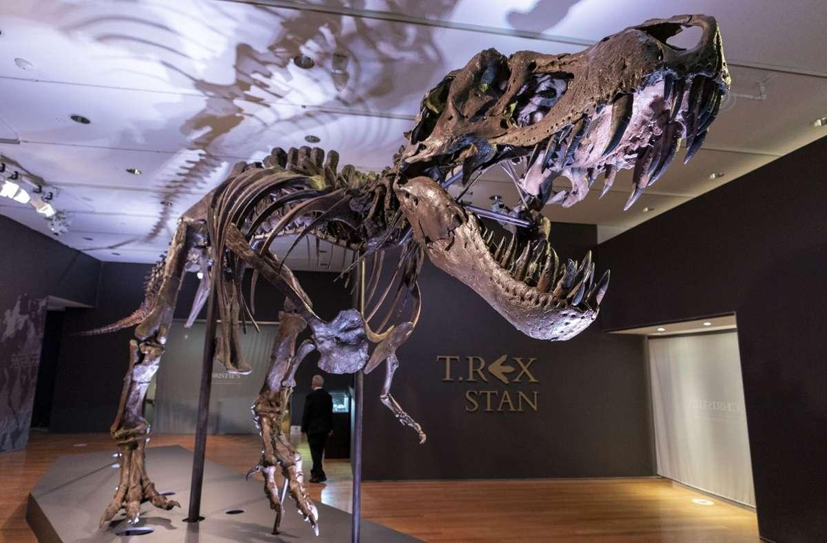dinosaurierskelett versteigert trexskelett erzielt