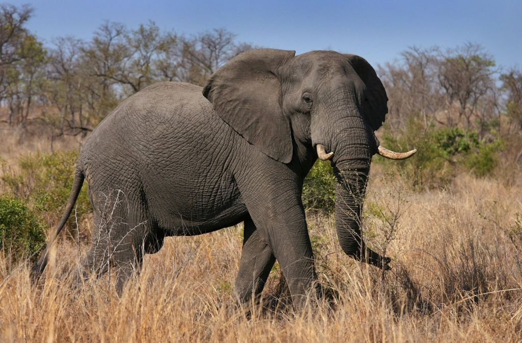 Elefant Ludwigsburg